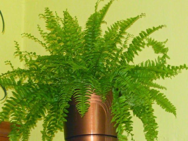 UZDROWICIELE BIOTERAPIA AKUPRESURA ZIOŁOLECZNICTWO EGZORCYZMY: Rośliny domowe dla zdrowia