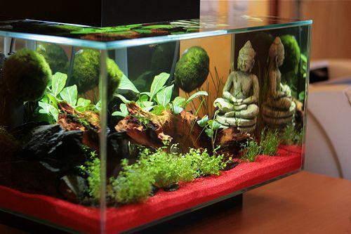 Cool Aquarium Set-up. #fluval