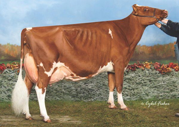 Ms Delicious Apple-RED EX94