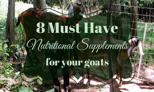 A well stocked medical cabinet is a must for all goat owners. Here are 8 must have nutritional supplements for goats that you should always have handy.