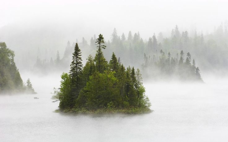 Las, Drzewa, Mgła, Jezioro
