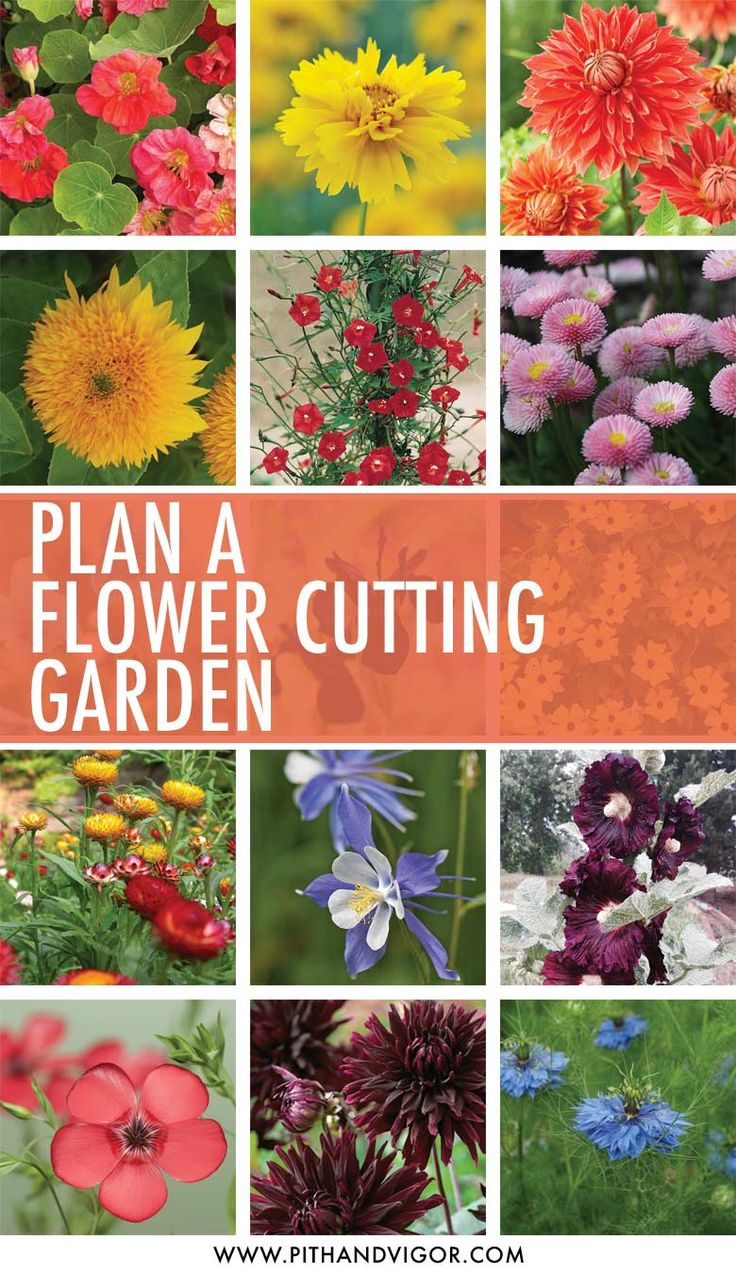 Cutting Garden Design Plans 254 best florals, floristry, cutting gardens & homegrown flowers