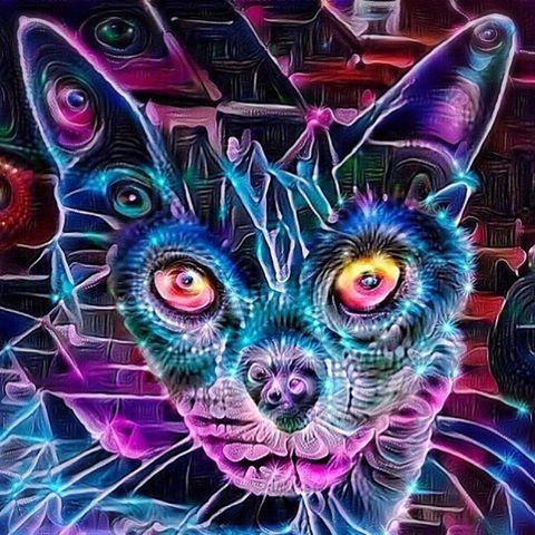 by @electriccatnip #cat #acid #lsd #dmt #psilocybin #halucination #magic #trippy #trippyart #psychedelic #psychedeliccat #psychedelicart #trippycat