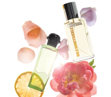 Fragrance Finder - My family is WOODSY. {Cedar, Sandalwood, Amber, Patchouli, Tuberose, Bergamot, Rose, Musk}