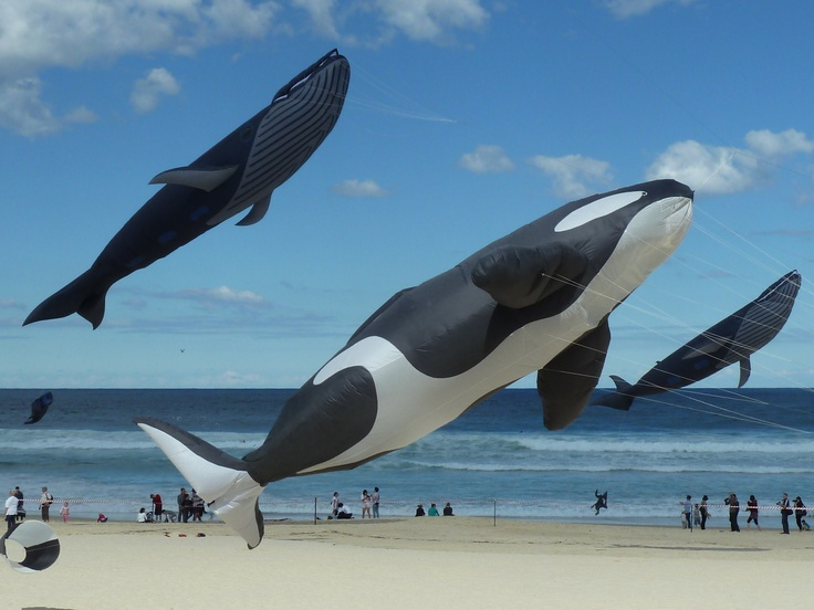 Festival of the Winds 2011.  Whales swimming in the sky over Bondi!