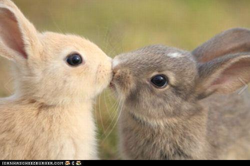 Kissin' bunnehs!: Rabbit, Bunnies Kiss, Cute Animal, A Kiss, Easter Bunnies, Baby Bunnies, Adorable, Things, Kisses