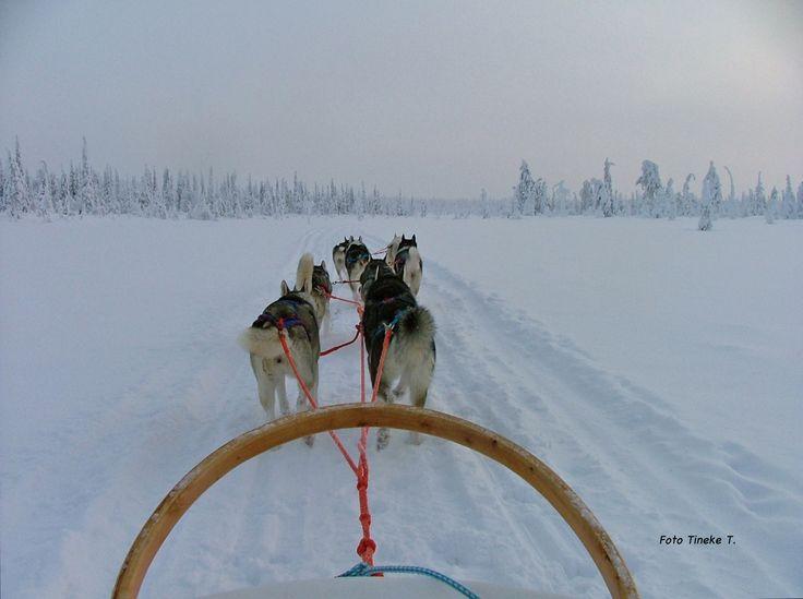Fins Lapland. Na een aantal jaren mogen we alleen, met 8 honden voor de slee, op pad.