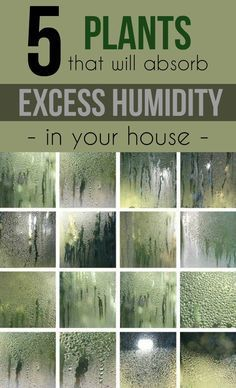 It is known that too high relative humidity in the room is not exactly what we need for a healthy en