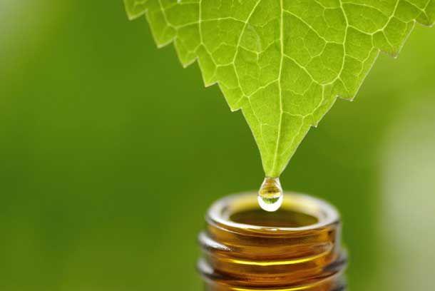 Usos do óleoEssencial de Melaleuca (Tea Tree)