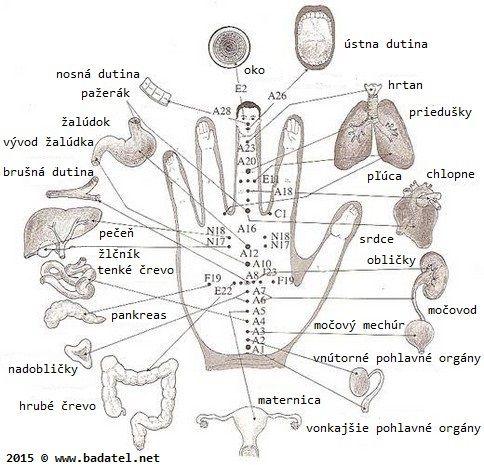 Každý prst je spojený s 2 orgány