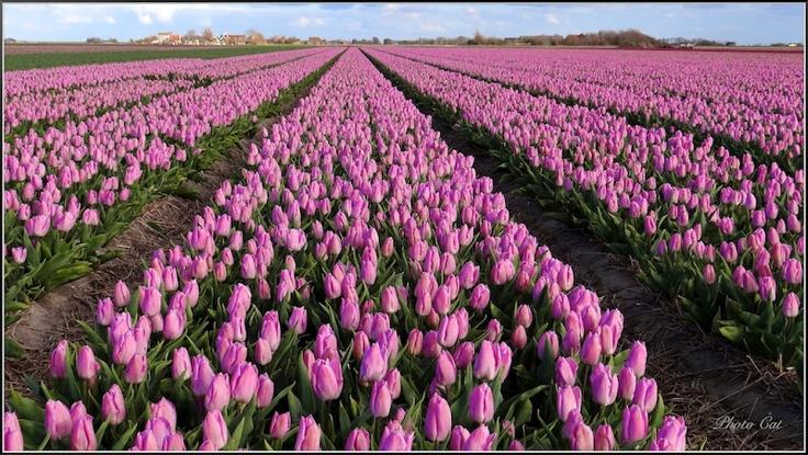 Beautiful Texel