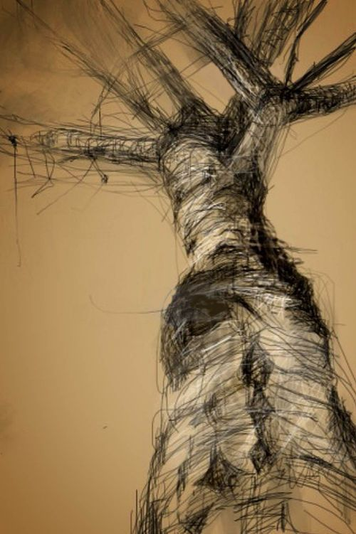 Inspiration for sketch a day , day 53 ~ Trees.    Birch Tree. iPhone sketches of Amanda Kavanagh. Excellent blog by the artist to demonstrate her various methods of working from oil to sketchbook and iphone