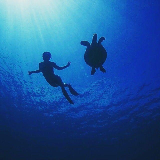 @hanliprinsloo and turtle freediving! #spierre #freediving #apnea image: @petermarshallphoto