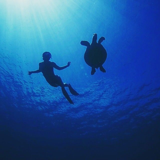@hanliprinsloo and turtle freediving! #spierre #freediving #apnea image: @petermarshallphoto