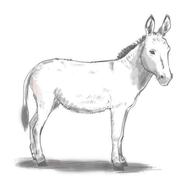 Line Drawing Donkey : Donkey drawing imgkid the image kid has it