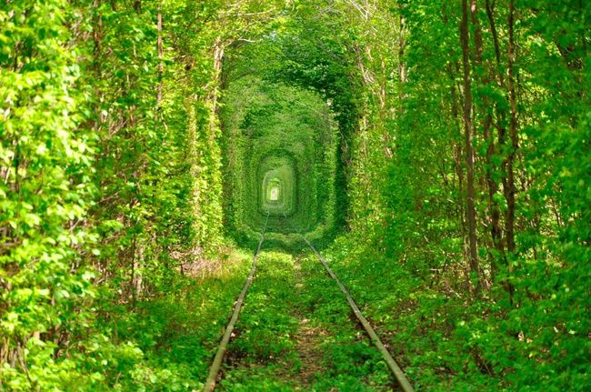 Los túneles árbol más hermosos del mundo