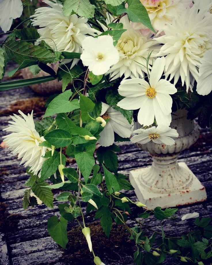 I know it's a pernicious weed but if it will insist on growing in my garden it will find itself in an arrangement! Urn fun!  _ _ _ _ _ _ #gatherandcurate #gatheringbeauty #underthefloralspell @flowerona #inspiredbypetals #petalsandprops #natureinthehome #stylingtheseasons #embracingtheseasons #cherishandrelish_july #ccseasonal #fouriadorefriday @kimklassen @prairiegirlstudio #weddingflowers #suffolk #weddingflorist #urn #arrangement