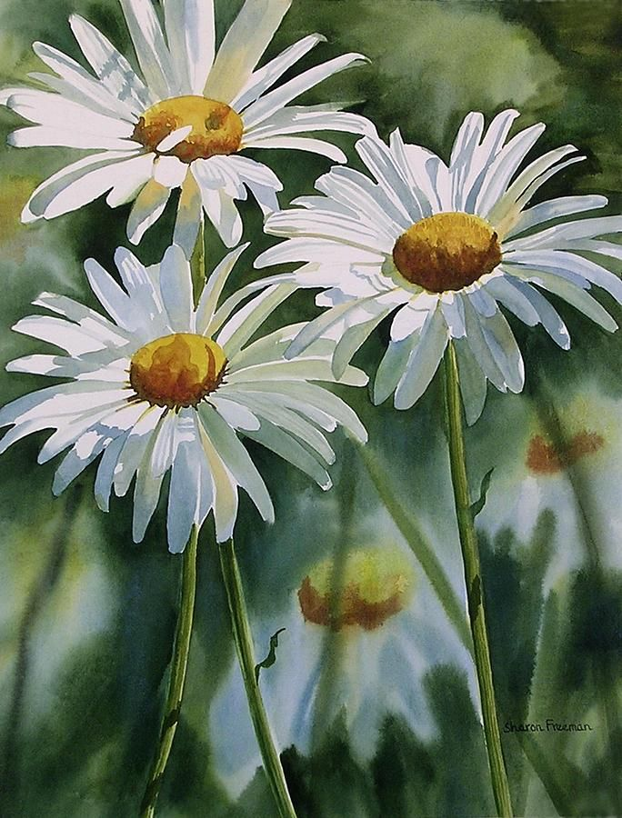 Daisy Trio Painting by Sharon Freeman