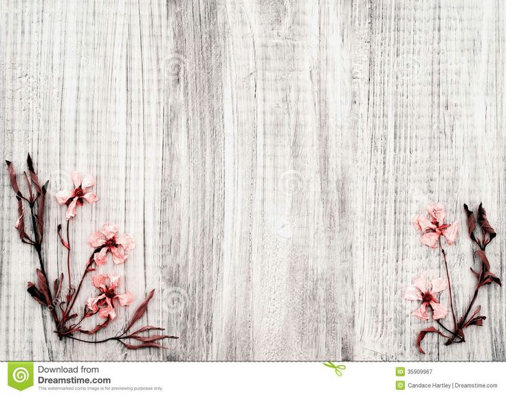 Pretty Dried Rock Rose Flowers On Rustic White Wood Background With Room Or Space For Text Copy Words In The Center Area