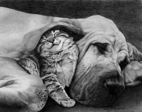 : Cats, Animals, Dogs, Friends, Pets, Adorable, Pencil Drawing, Smile
