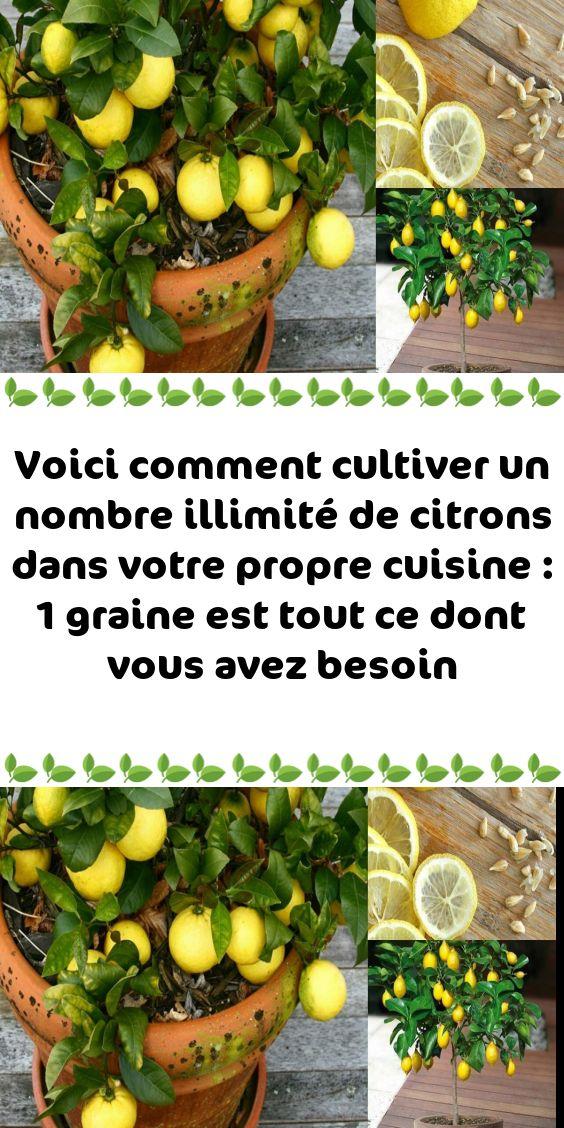 Voici remark cultiver un nombre illimité de citrons dans votre propre delicacies : 1 graine est tout c