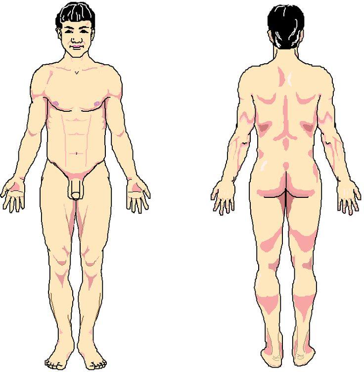 14 best Anatomía Humana images on Pinterest | Human anatomy, Medical ...