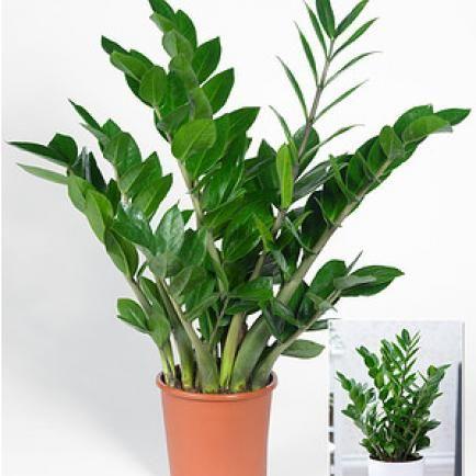 27 besten pflanzen bilder auf pinterest zimmerpflanzen diy dekoration und garten pflanzen. Black Bedroom Furniture Sets. Home Design Ideas