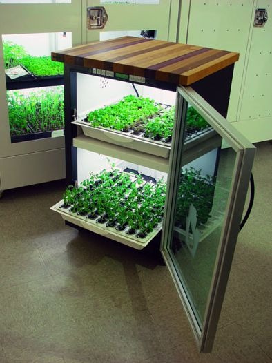 Indoor Vegetable Garden System   Google Search