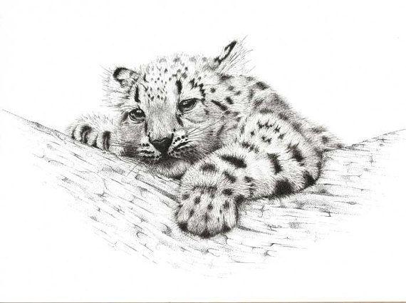 Artwork Snow Leopard Cub. Limited Edition 25 fine by DaisyClaridge