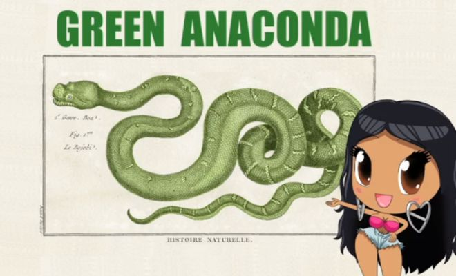If Nicki Minaj's Anaconda Was Actually About Anaconda's! - Gorilla Gang
