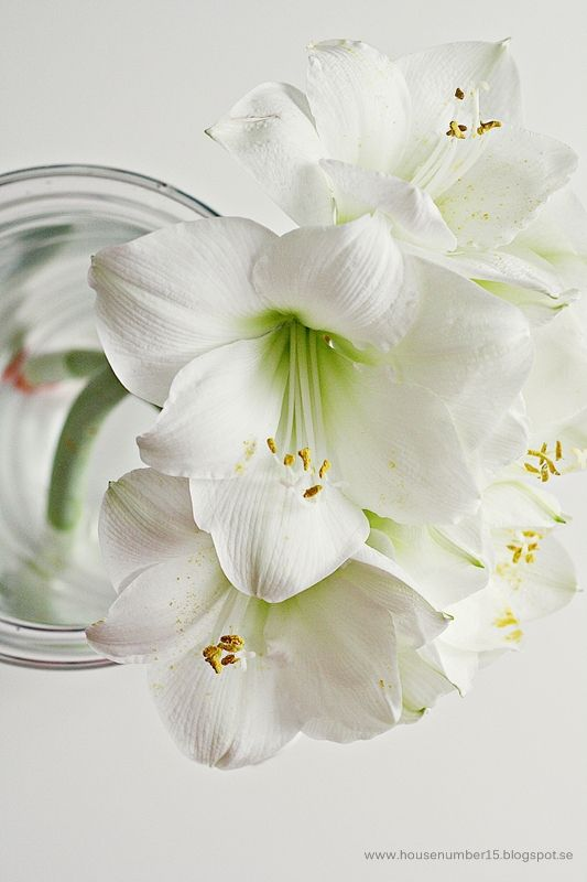 white | lily | flower | jar