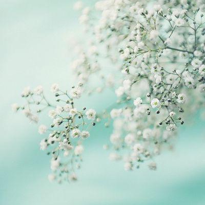 Beautiful shot with Mint background. Photo © Inez Ligeti Photography.