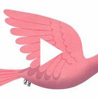 Emmanuelle Walker - Beautiful Birds  Tiphaine-illustration  #shortmovie #birds
