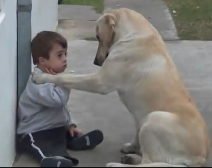 Dog Takes His Time With Boy Who Has Down Syndrome & Does Not Like To Be Touched