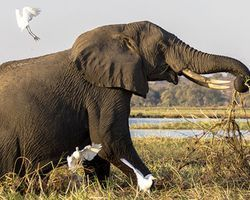 Save Tanzania\'s elephants from poachers - The Petition Site: Tanzania wants to sell off its stockpile of ivory, a terrible decision that will only put already endangered elephants further at risk by feeding demand. Tanzania is seeking the approval of CITES (Convention on International Trade in Endangered Species of Wild Flora and Fauna) to do this.