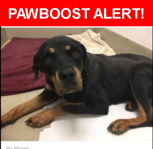 Is this your lost pet? Found in Austin, TX 78744. Please spread the word so we can find the owner!  Female Rottweiler mix found on July 11th near Nuckols Crossing and E Stassney. Currently on stray hold Austin Animal Center with ID#A753787. Please claim ASAP if you are her owner.   Near Nuckols Crossing Rd & E Stassney Ln