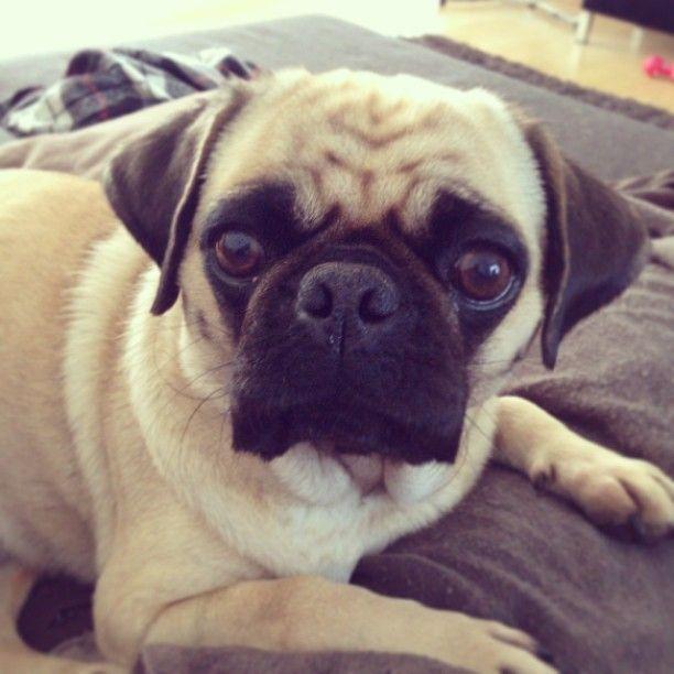 Lola is making big eyes