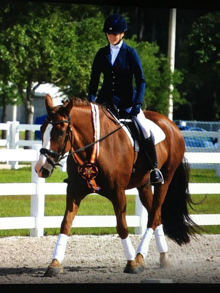 Pin by Alsosusieq2 on Horse Geek in 2020   Horses, Animals