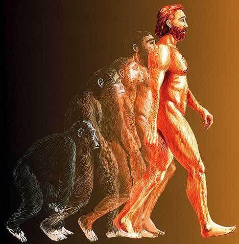 more bogus evolution
