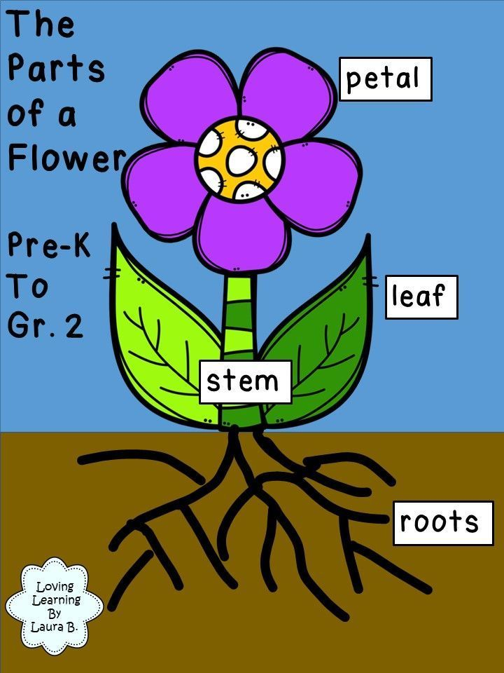 The Parts of a Flower Labeling Activity Pre-K to Grade 2 ...