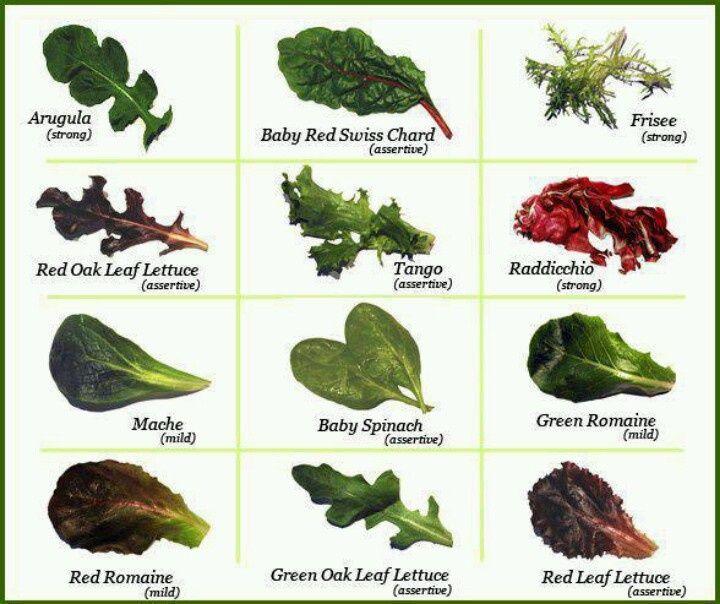 lettuce varieties chart - Google Search