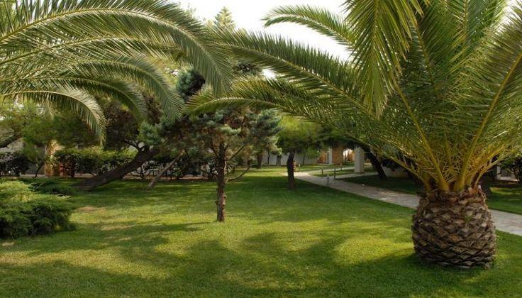 Verde & Mare Bungalows στο Κοκκώνι Κορινθίας, μια ώρα από την Αθήνα, μόνο με 99€!