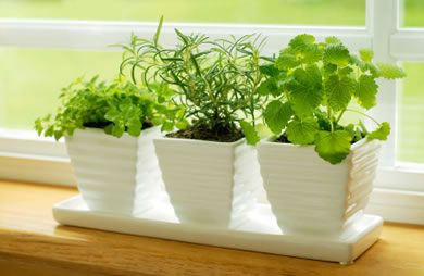 How to Start an Indoor Herb Garden  Don't let limited space or experience prevent you from gardening. Growing herbs indoors is a convenient & affordable way to add more flavor to your meals. Oregano, chives, mint, rosemary & thyme are commonly grown indoors.