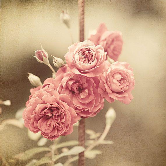 Best 25  Rose arrangements ideas on Pinterest | Rose flower ...