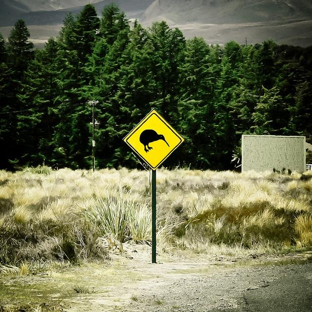 Kiwi    Tongariro, New Zealand