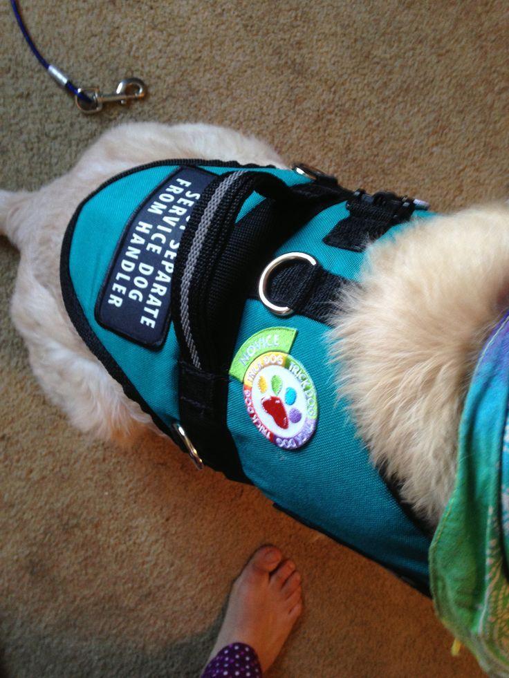 Canine Skill Mastery: Service Dog Training