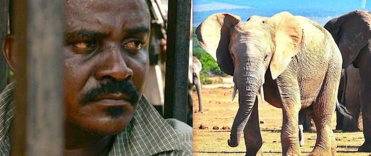 CAUGHT: The Man Who Killed Thousands Of Elephants
