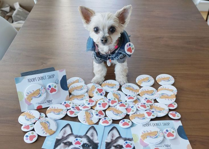 LeaderShape grad Nate Stevens and his partner Kate Lind created Pincause.  --- Ella Bean wants to stop puppy mills.