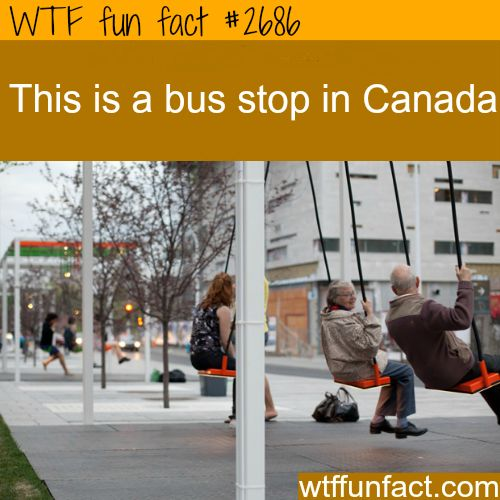 I'd never get on the bus!