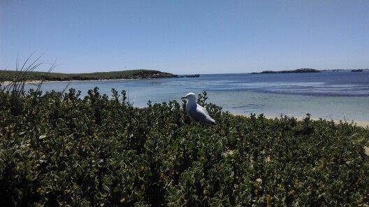 Penguin Island WA